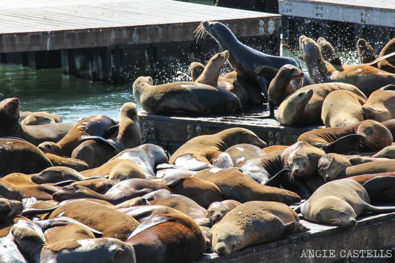 Que ver San Francisco Itinerarios Leones Marinos Pier 39