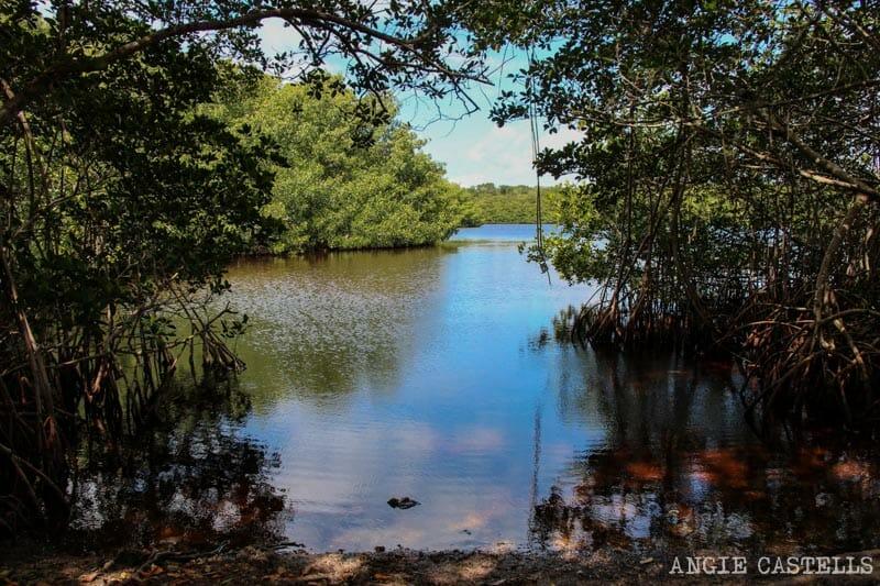 Visitar Everglades Florida excursiones caimanes-1
