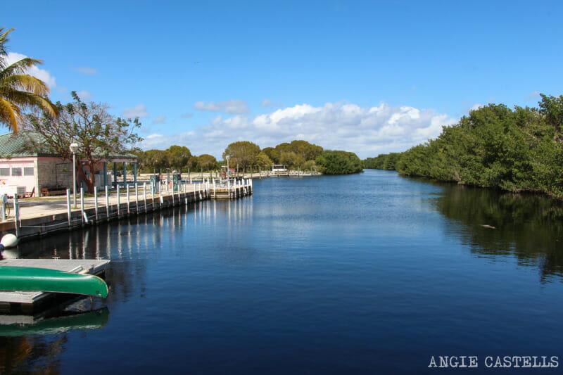 Visitar Everglades Florida excursiones caimanes