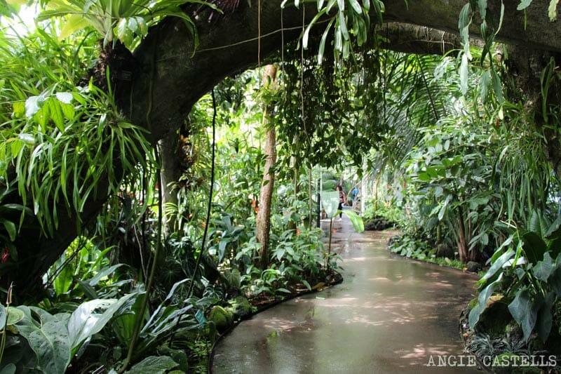 Visitar Jardin Botanico Nueva York Bronx