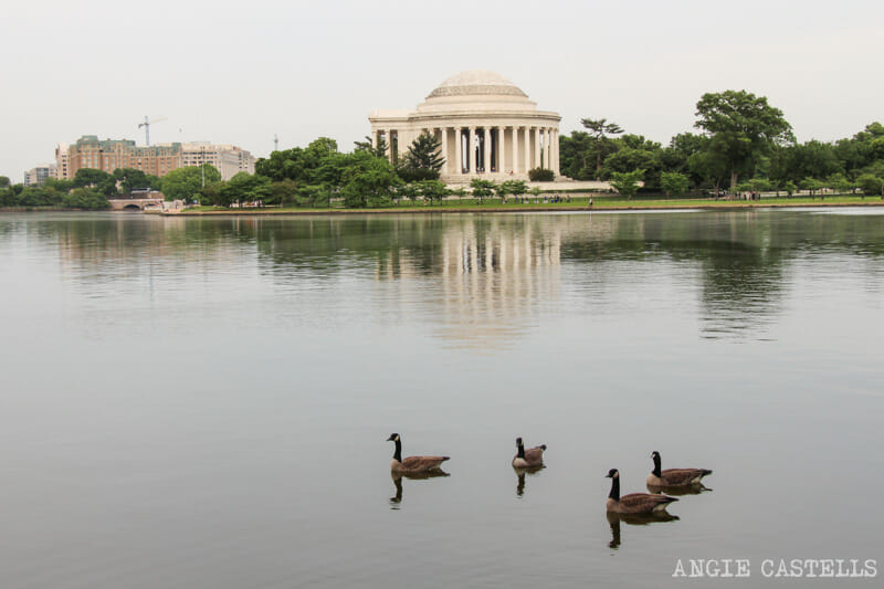 Guia Washington DC Que ver Excursion desde Nueva York Jefferson Monument